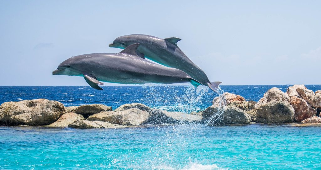 High Shutter Speed Photograph of Dolphins Jumping